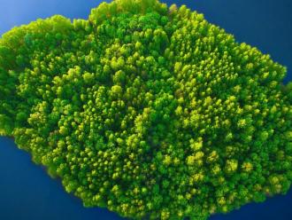 bnp island