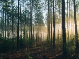Newton forest