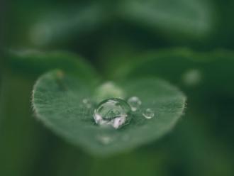 drip on leaf